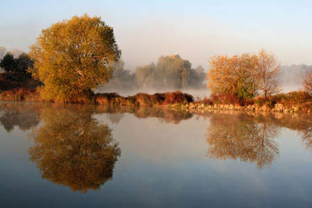 Autumn tree reflection in water