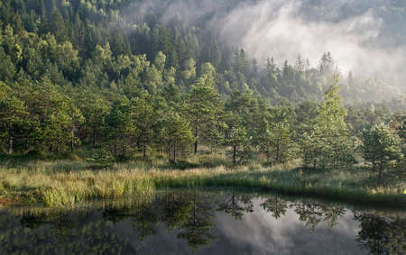 Misty forest and lakeside Standard-Bild