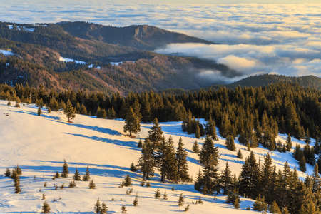 winter sunrise: Beautiful winter sunrise in the mountains with pine trees