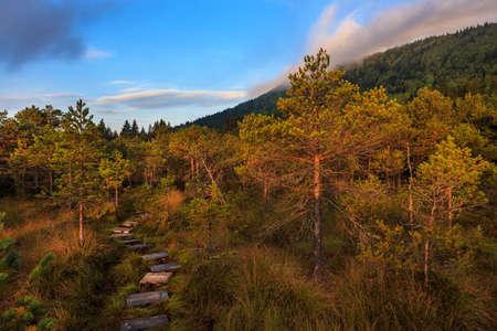 turba: madera en el camino de la turbera Carphatians