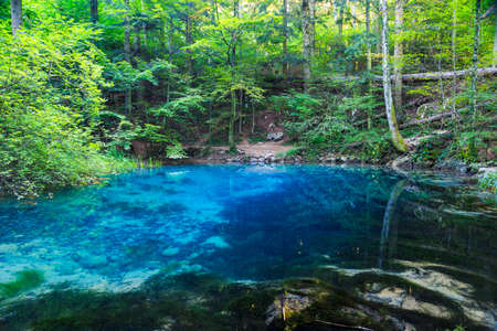 source d eau: Clear and beautiful water source in forest