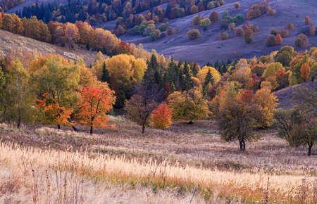 Transylvanian autumn dusk in the valley meadow Standard-Bild