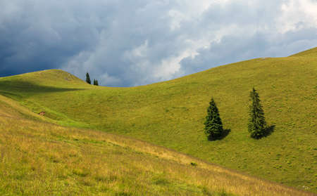 Lonely trees on hill minimal in summer Stock Photo