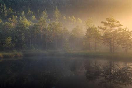 bog lake in morning fog