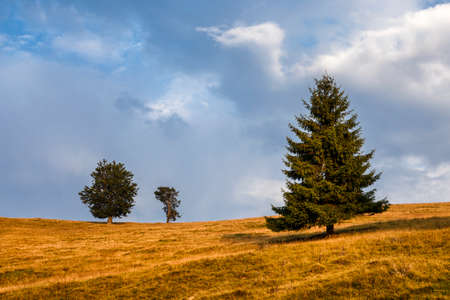 Lonely tree in the meadow.Last rays of he sun. Transylvania