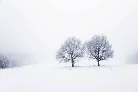 Winter landscape with trees on a snow covered field