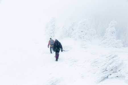 Tourists with backpacks walking through snow-covered mountain meadow in blizzard in the Carpathians. Standard-Bild