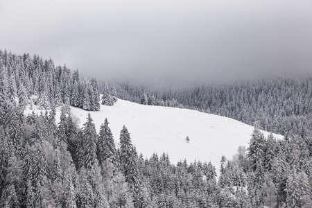 Winter landscape with pine trees in snowy mountain meadow. Mysterious foggy forest. Carpathians Standard-Bild