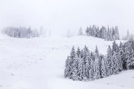 Winter landscape with pine trees in snowy mountain meadow. Mysterious foggy forest. Reklamní fotografie