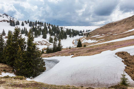 Landscape view over snowy moutains, spring grass alpine area, beautiful wild nature, pine trees, cloudy sky