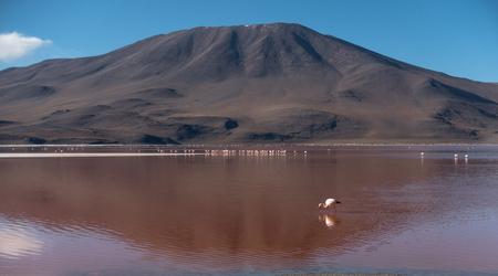 Flamingoes in Laguna Colorada , Uyuni, Bolivia. A beautiful place.