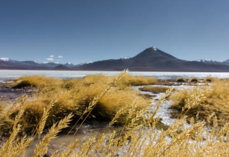 Laguna blanca in the Salar de Uyuni, Bolivia Imagens