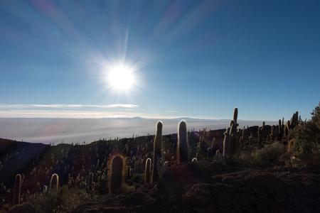 Big cactus in Incahuasi island in the time of sunrise Imagens