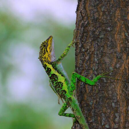 lizard in tree(sharp)