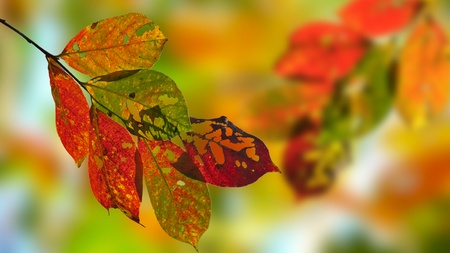 fall leaves on white: Beautiful Autumn Leaves