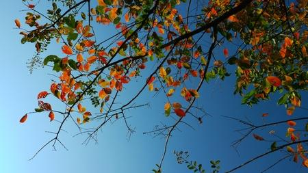 Beautiful Autumn leaves against blue sky
