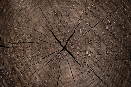 l natural: Tree Rings for texture