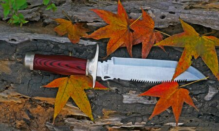 Maple leaves with knife over wooden Stock Photo
