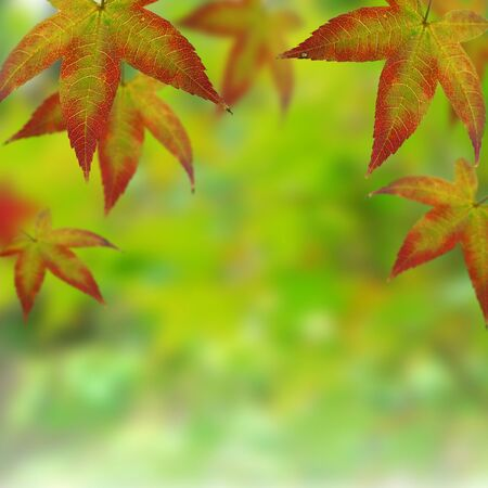 Autumn leaves, shallow (selective) focus Stock Photo