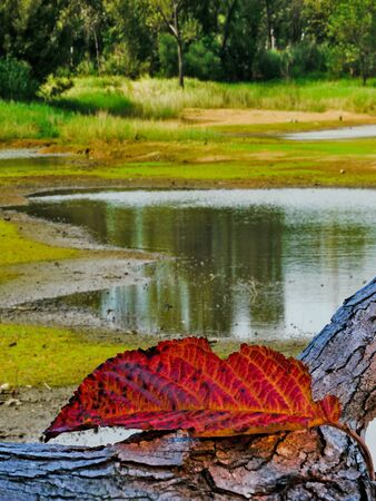 Autumn leaf on fallen tree in the pond. Stock Photo