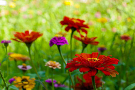 Colorful wild flowers in a field