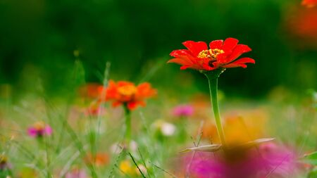 Close up of wild flowers in colorful field. Stock Photo