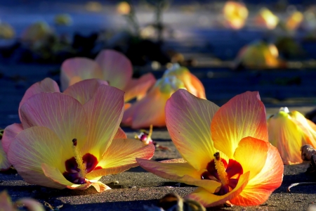 Sunset afterglow  lighting on the fallen flowers.