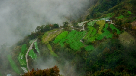 Cabbage which terraces in a smoke-filled mountain of Taiwan Stock Photo