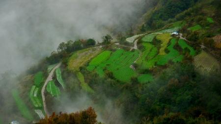 Kool die terrassen in een met rook gevulde berg van Taiwan