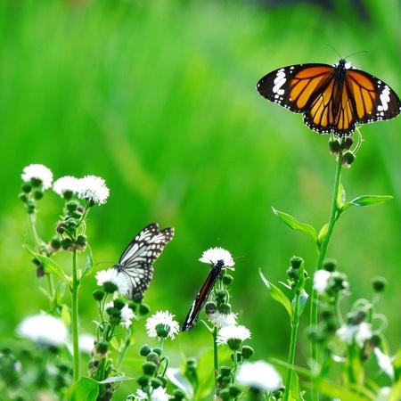 Papillons sur fleur Banque d'images - 16954065