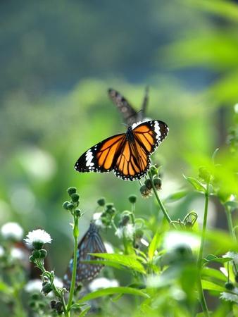 Papillons sur fleur Banque d'images - 16954066