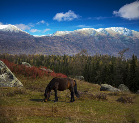 A horse in the meadow with magnificent mountain on back, Kanas National Geopark, Xinjiang, China