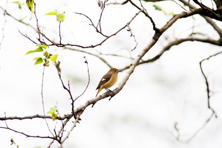 A little bird sitting on branch taken in Taiwan