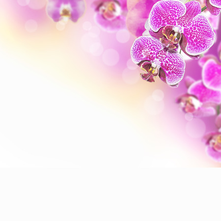 Orchid Flower border design Stock Photo