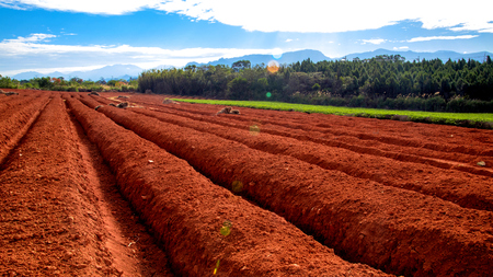Tea planting field under soil preparation, landscape of agriculture Taiwan