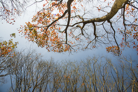 Autumn trees in forest under blue sky Stock Photo