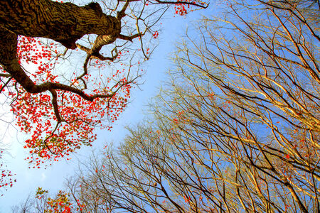 Autumn trees in forest with blue sky