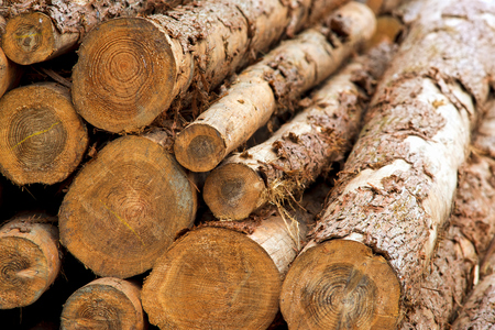 pile of logs: Wood pile, pile of logs Stock Photo