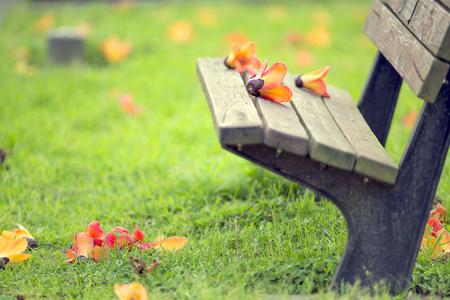 park bench: Kapokbombax ceiba trails with bench in the park. Stock Photo