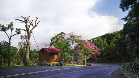 Floss-silk Tree landscape Stock Photo