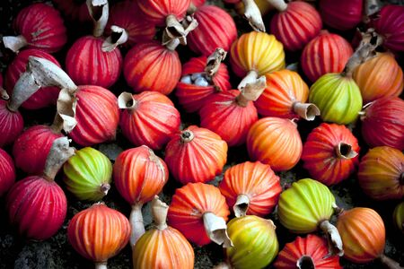 Image of colorful fruits. Stock Photo