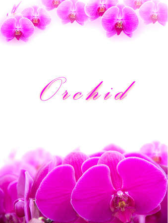 pink orchid: Beautiful Pink orchid flower arranged as a card with copy space.