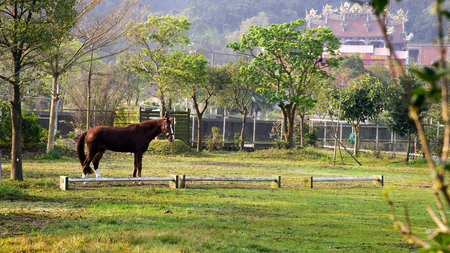 A horse standing on the yard