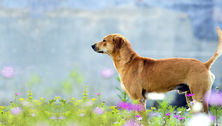 An medium-sized dog standing in grass. Stock Photo