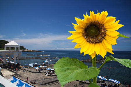 Beautiful landscape with sunflower over cloudy blue sky and bright sun lights. Stock Photo