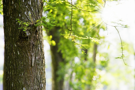 Close up of tree trunk shot in the spring morning. Stock Photo
