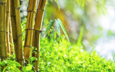 Zen bamboe