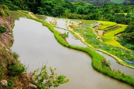 Rice Fields, Taiwan