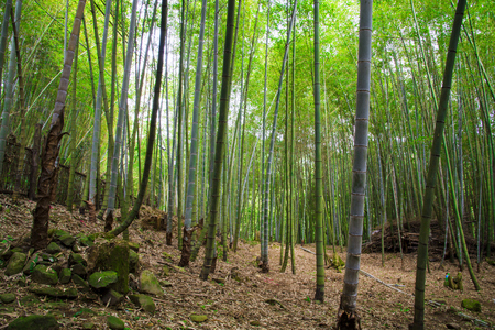 Bamboo forest in een zonnige dag.