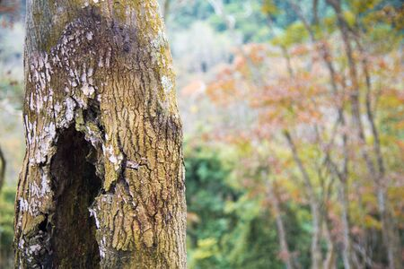 The bark texture of maple
